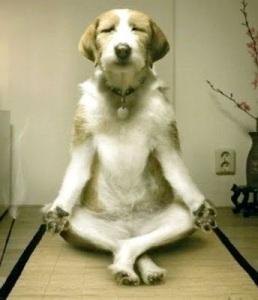 peace-dog